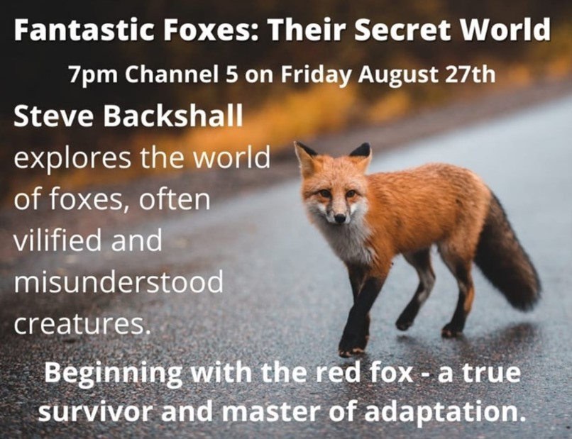 Fantastic Foxes and Their Secret World